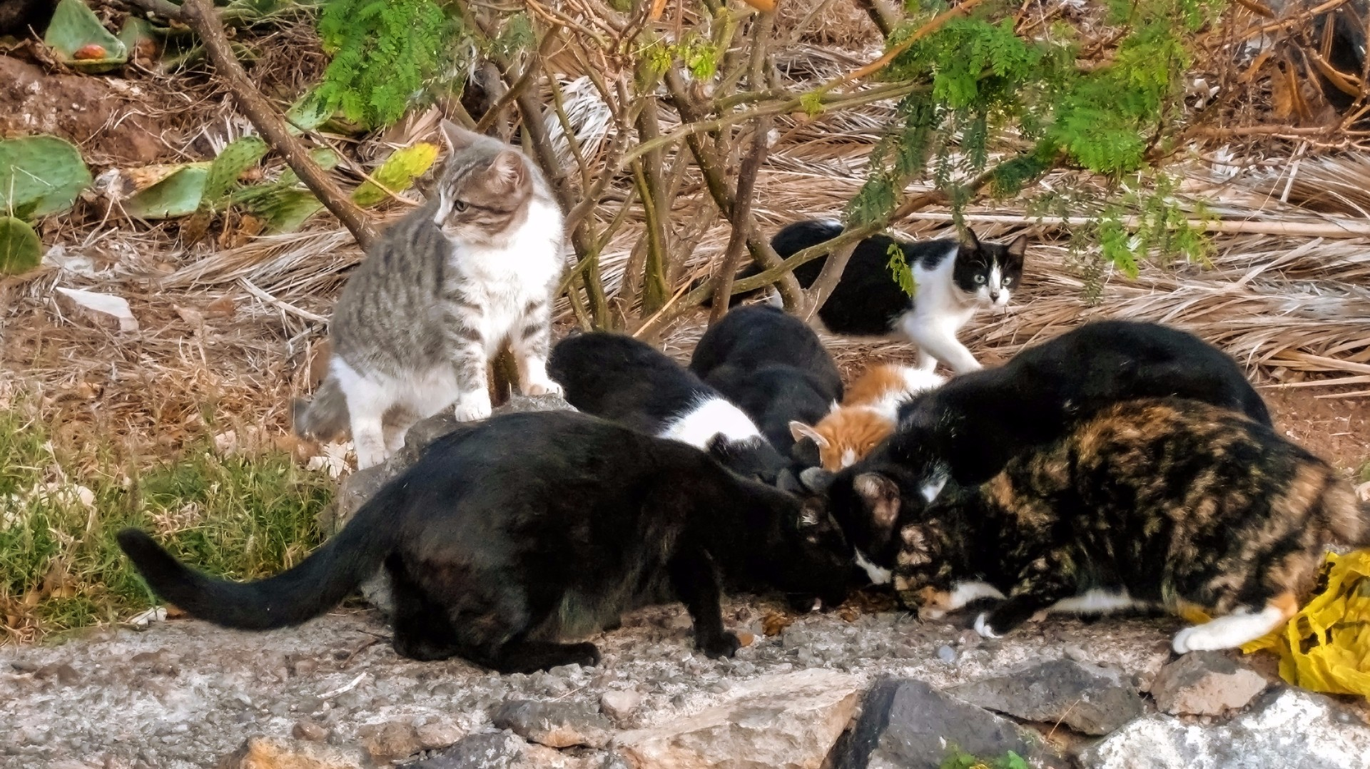 Neighbors On The Hunt For Cat Feeding Culprit Kens5 Com