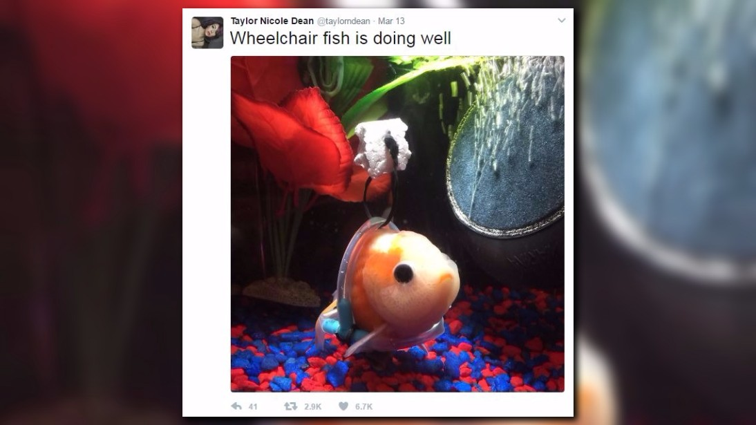 S a man builds wheelchair for goldfish goes viral for Sa fishing 5 for 15
